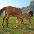 Foal and mare — Stock Photo #1039622