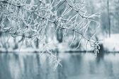 Ice on tree — Stock Photo