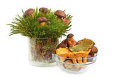 King boletus edulis and chanterelles — Stock Photo