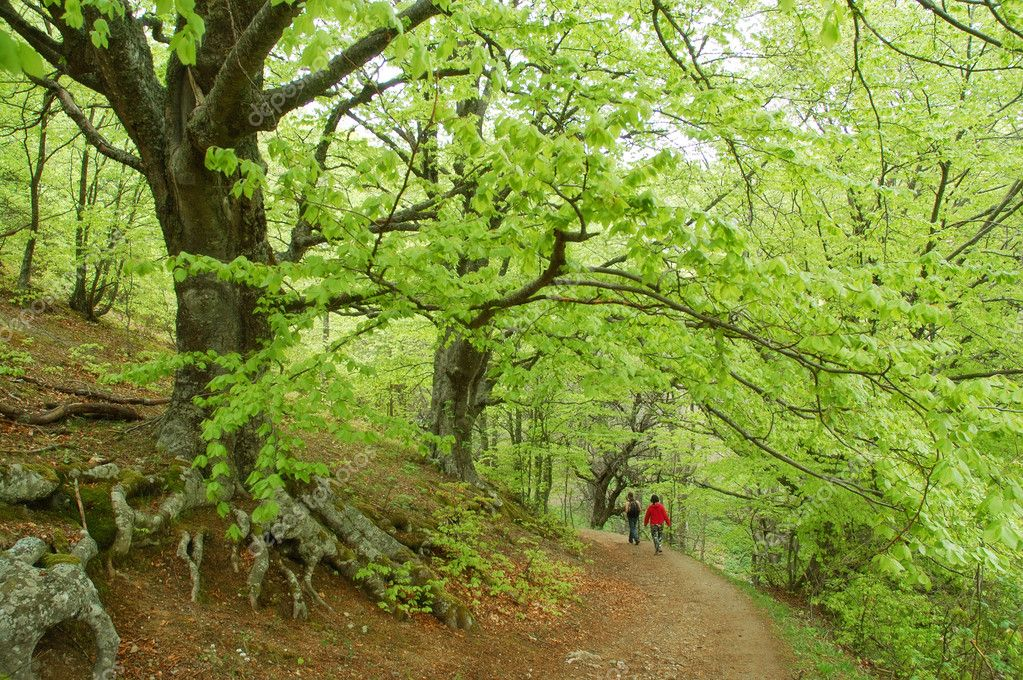 Couple walking on footpath through mysterious beech forest — Stock Photo #1037840
