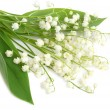 Lily of the valley — Stock Photo #1041003