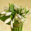 Stock Photo: Snowdrop flowers