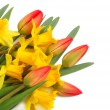 Red tulips and yellow narcissus — Stock Photo #1043291