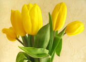 Bouquet of yellow tulips — Stock fotografie