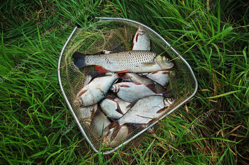 як я рибу ловив