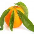 Orange citrus — Stock Photo