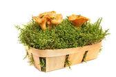 Rebozuelos en una cesta — Foto de Stock