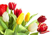 Colored tulips — Stock Photo
