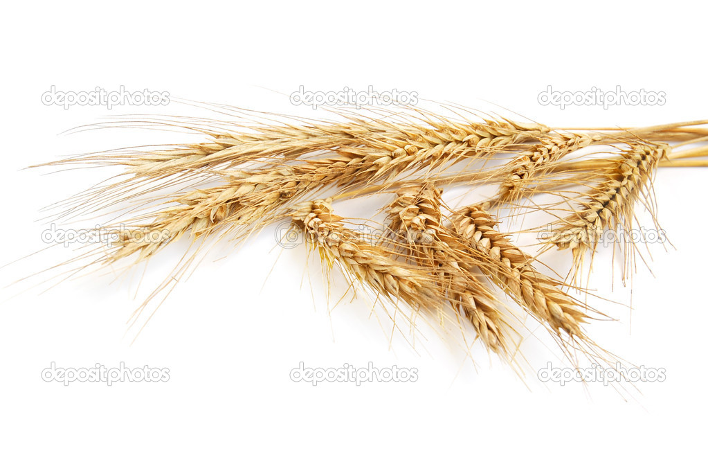 Wheat ears isolated on white background — Stock Photo #2152345
