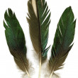 Stock Photo: Three feathers