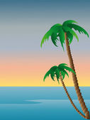 Two tropical palm trees — Stock Photo