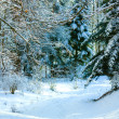 Winter forest trail — Stock Photo #1013822