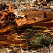 Stock Photo: Old destroyed wood