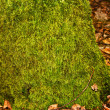 Royalty-Free Stock Photo: Overgrown moss