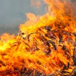 Stock Photo: Conflagration