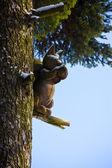 Wooden squirrel — Stock Photo