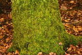 Overgrown moss — Stock Photo