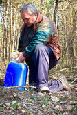 Collecting birch sap — Stock Photo