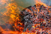 Forest conflagration — Stock Photo