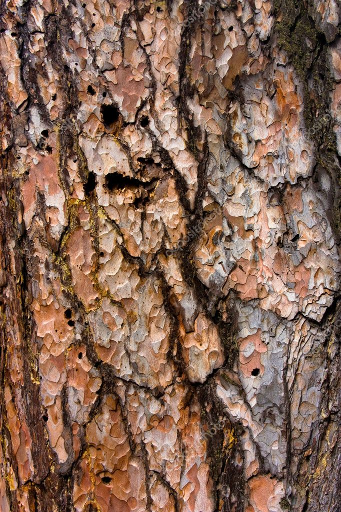 Pine bark as a backdrop — Stock Photo #1018278