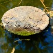 Stump in water — Stock Photo