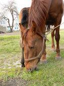 Horse eat — Stock Photo