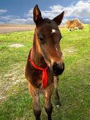 Small Horse — Stock Photo