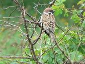 Sparrow on the tree — Stock Photo