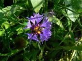 青い花に蜂 — ストック写真