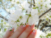 Nails on the blossom — Stock Photo