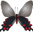 Black with red butterfly — Stock Vector