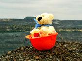 Bear in the helmet — Stock Photo