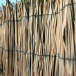 Stock Photo: Bamboo background