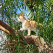 Stock Photo: Cat on tree