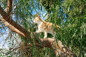 Cat on the tree — Stock Photo