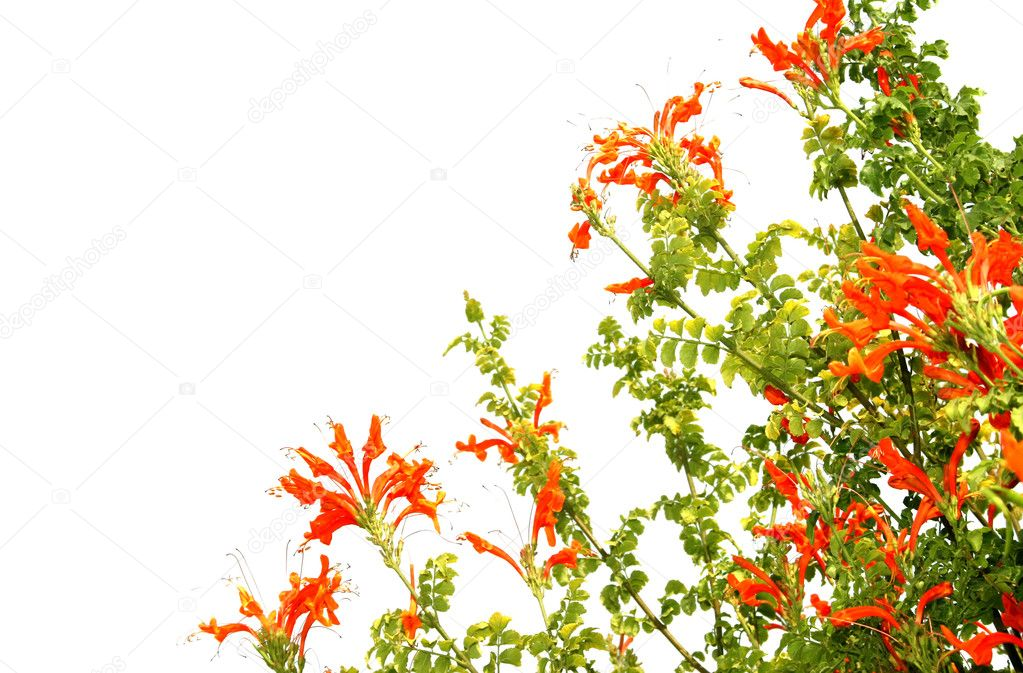 Beautiful red tropical flowers. — Stock Photo #1042466