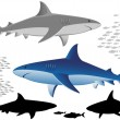 Sharks and fish — Stock Vector