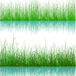 Green Grass - isolated on white — Stock Vector