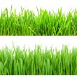 Green Grass — Stock fotografie