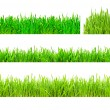 Green Grass — Stock Photo #1008406