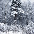 Royalty-Free Stock Photo: Snowy weather in the forest