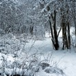 Royalty-Free Stock Photo: Winter snowy forest