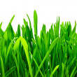 Green grass — Stock Photo #1008751