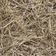 Hay — Stock Photo #1008946