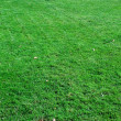 Grass — Stock Photo #1009089