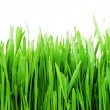 Fresh green grass — Stock Photo #1009352