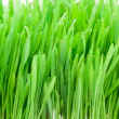 Fresh green grass — Stock Photo #1009376