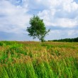 Lonely tree — Stock Photo #1009519