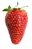 Fresh strawberry — Foto de Stock