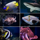 Exotic fishes — Stock Photo